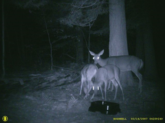 Deer in the same area :::: This image was obtained with the same ... Scary Deer Cam Pictures