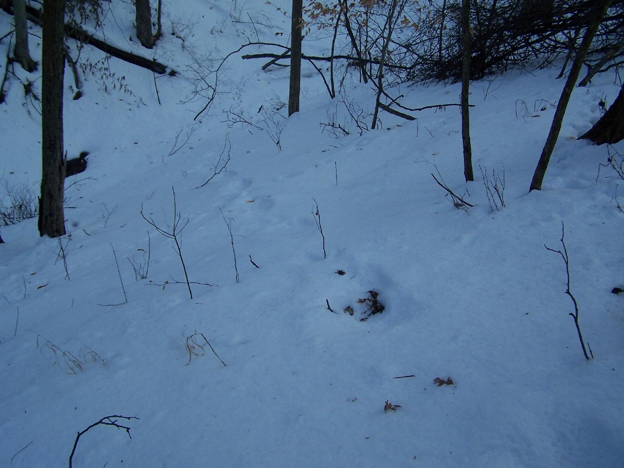 Down into the ravine, another angle.